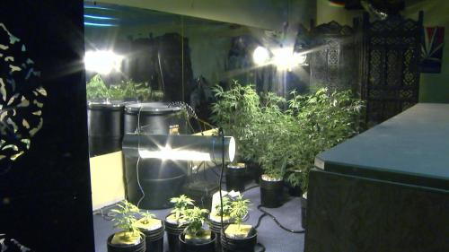 Child Advocates Want Bill Protecting Children From Pot Growing