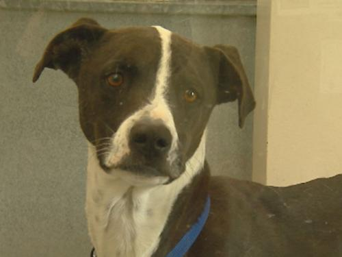 Dog Protection Measure Approved In Colorado Senate