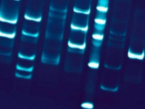 Expansion Of DNA Sampling Fails In Colorado