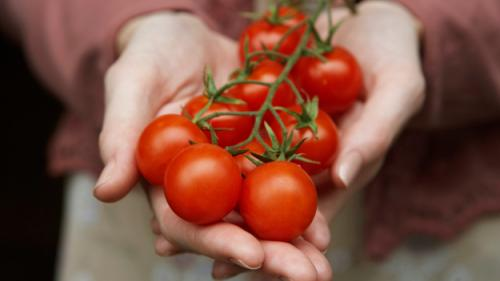 Ford Looking To Make Car Parts From Tomatoes