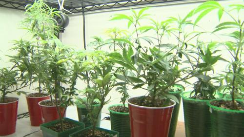 Neighbors May Get To Weigh In On Colorado Pot Shops