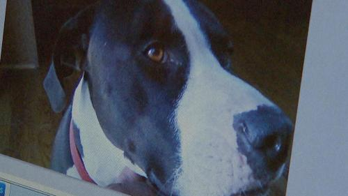 Police Union Calls Criminal Charge in Dog Shooting 'Outrageous'
