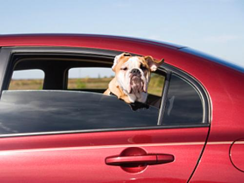 5 Things Your Car Has To Have To Be Pet-Friendly